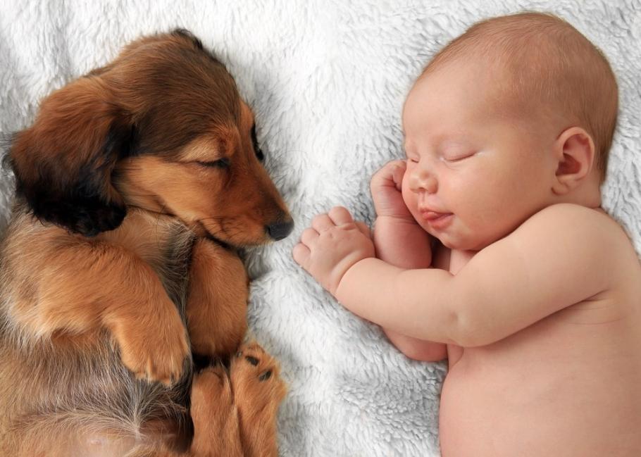 bebé mascota