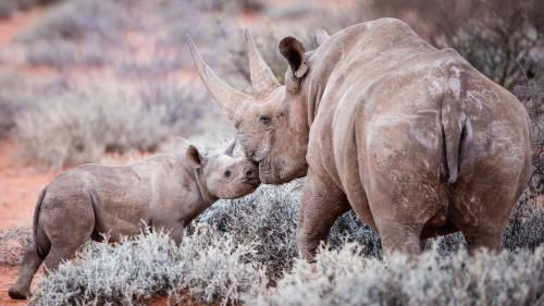 Experimentos genéticos crean animales anormales en Sudáfrica