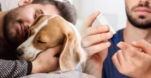 Cómo los perros pueden ayudar a los pacientes diabeticos