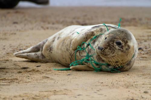 Lanzan un programa en Argentina para reciclar y reutilizar 200 toneladas de redes de pesca al año