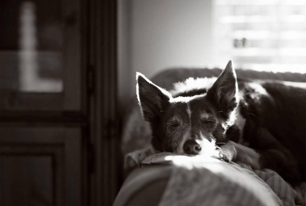 El Hachiko mexicano: la historia de un perrito conmovedoramente fiel