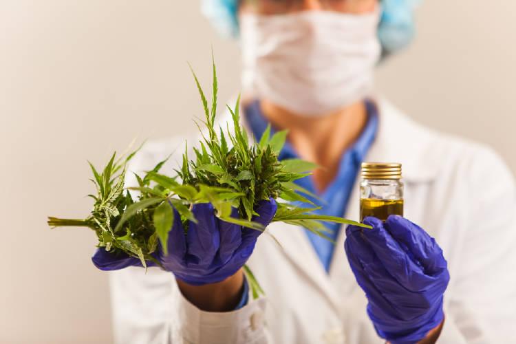 científico cannabis