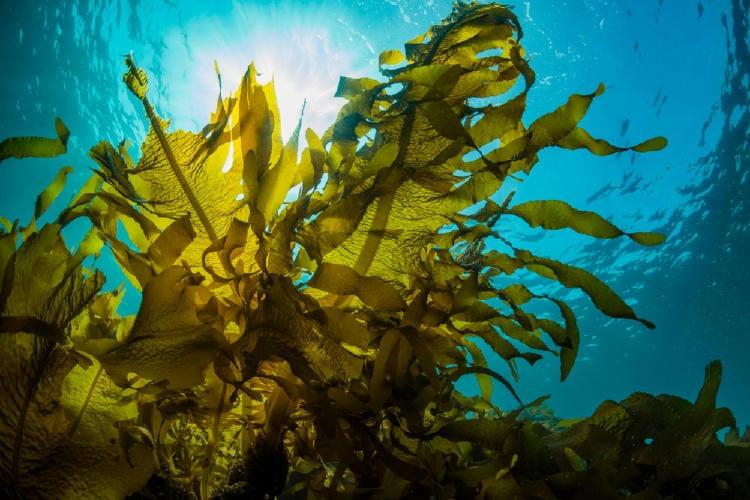 hábitat natural, bioma marino