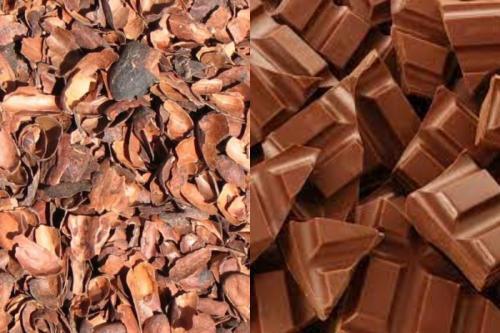 Reconocida marca de chocolate transformará la cáscara del cacao en energía verde