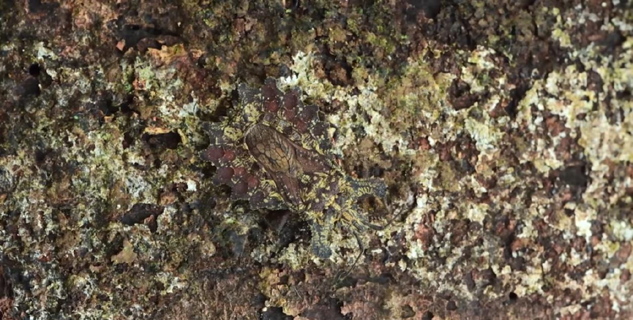 Nuevo reto viral: ¿puedes ver al insecto en el video?
