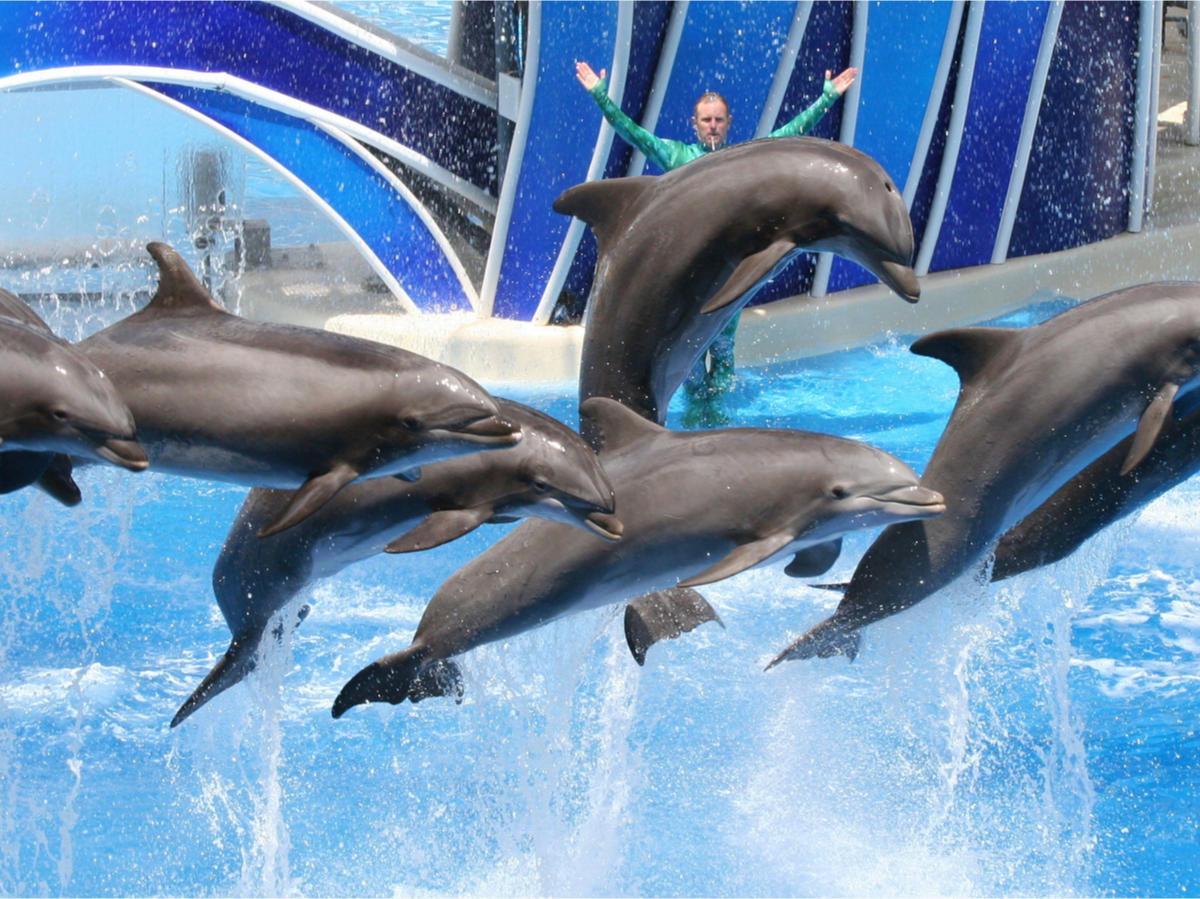 Estado australiano prohíbe los espectáculos de delfines para poner fin a la cría