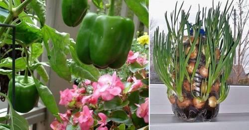 Los 5 mejores alimentos para plantar en casa y que no te falten nunca