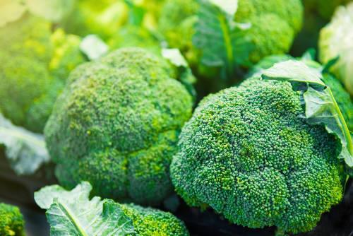¿El brócoli puede ayudarnos a prevenir el cáncer?