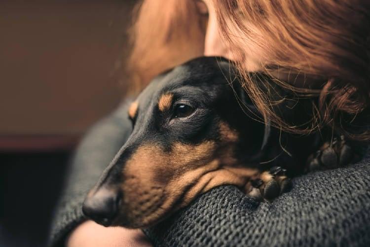 mujer triste perro