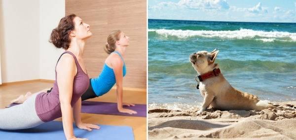 15 divertidas poses de animales haciendo yoga