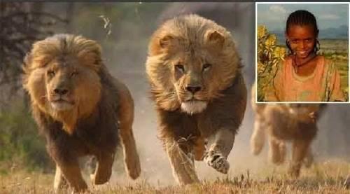 Estos 3 leones rescataron y protegieron a una niña de un grupo de violentos s..