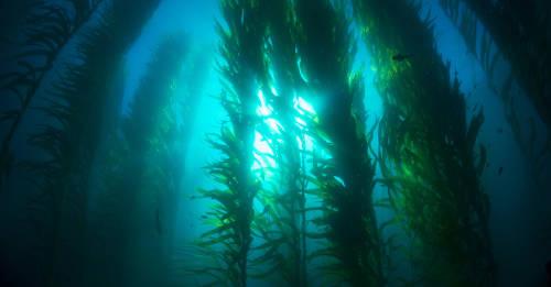 Descubre los bosques submarinos de Ártico