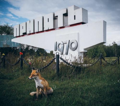"""Los animales """"mutantes"""" de Chernobyl: conoce las especies que habitan en la zona"""