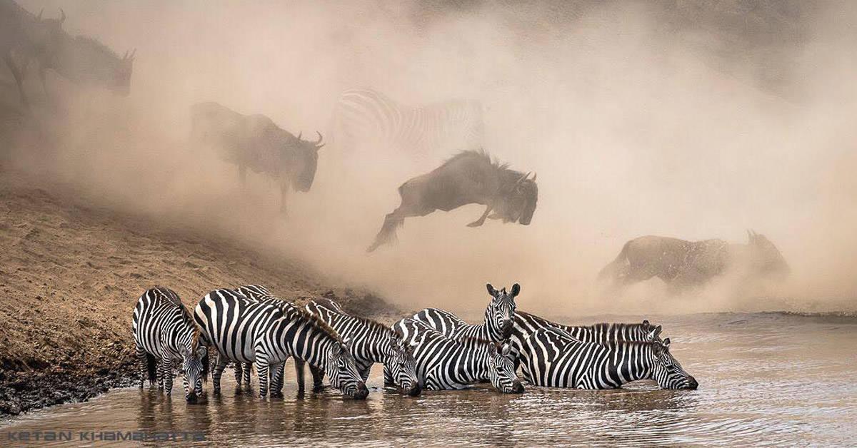Fotografías del concurso de National Geographic que captan momentos únicos