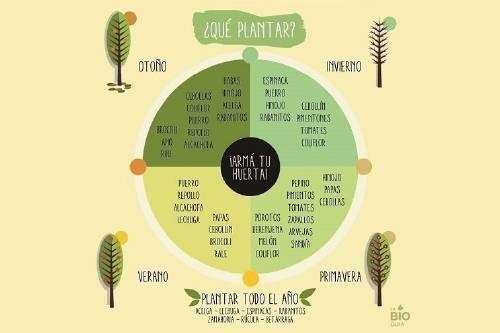 ¿Qué vegetales plantar en cada estación del año?