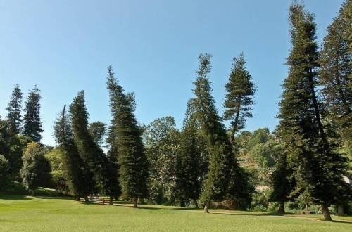 ¿Por qué este árbol se inclina siempre, pero en distinta dirección?