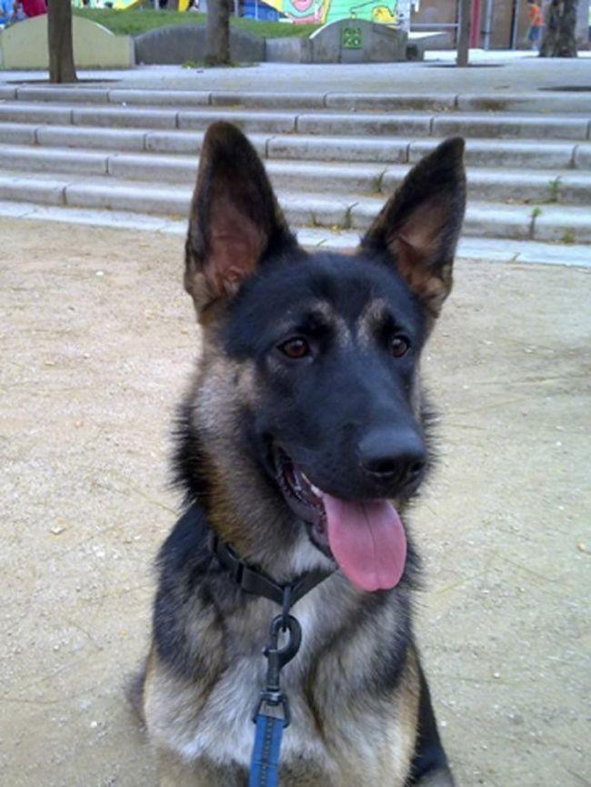 Este caso ayuda a crear referencia para otros casos de tenencia de mascotas