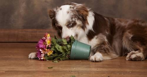 Truco eficaz para evitar que tu mascota arruine las plantas