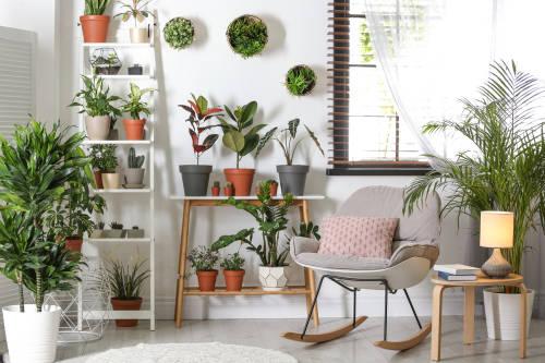 10 plantas de interior resistentes y muy fáciles de mantener