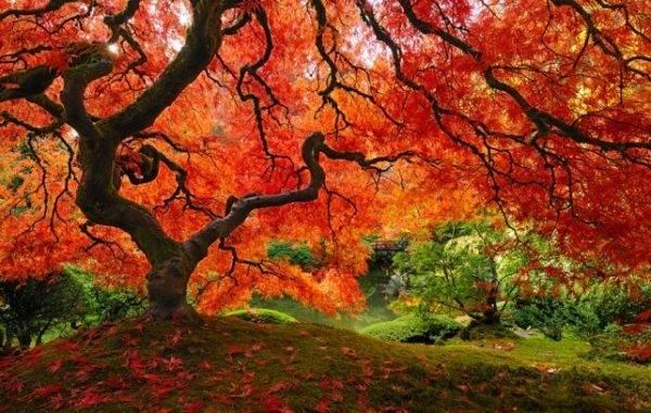 Los árboles mas bellos e impactantes del mundo