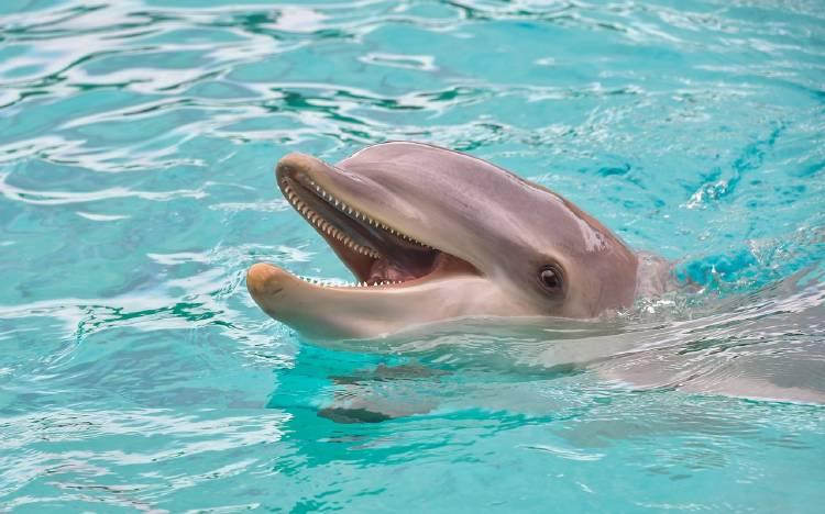 dolphin-3416508_1280