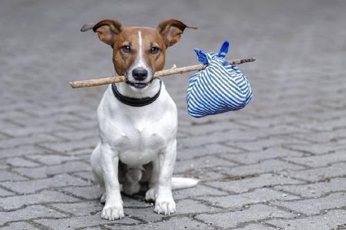 Los perros podrán viajar en metro en Madrid