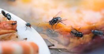 Trucos para alejar a las moscas de tu hogar sin usar productos químicos