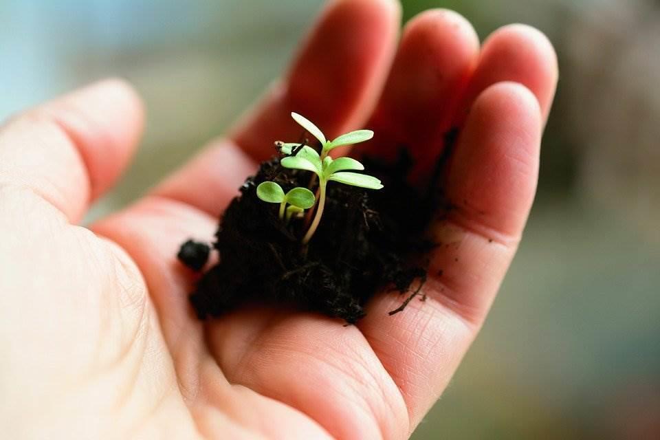 ¿Qué es la agroecología?: aplicar procesos ecológicos