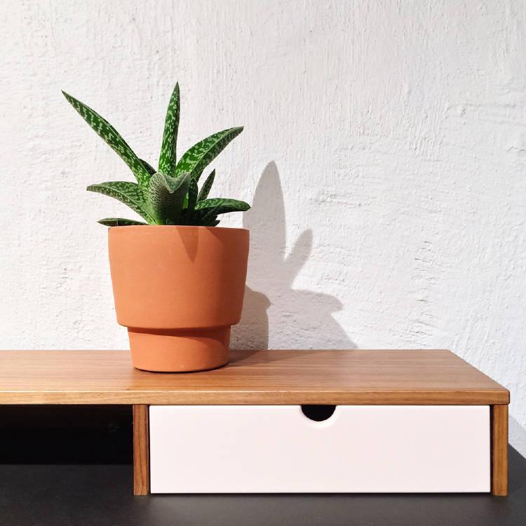 sansevieria planta de interior