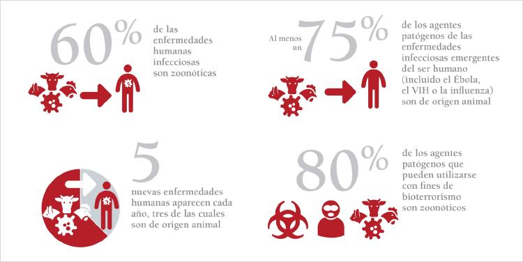 diagrama de enfermedades zoonoticas