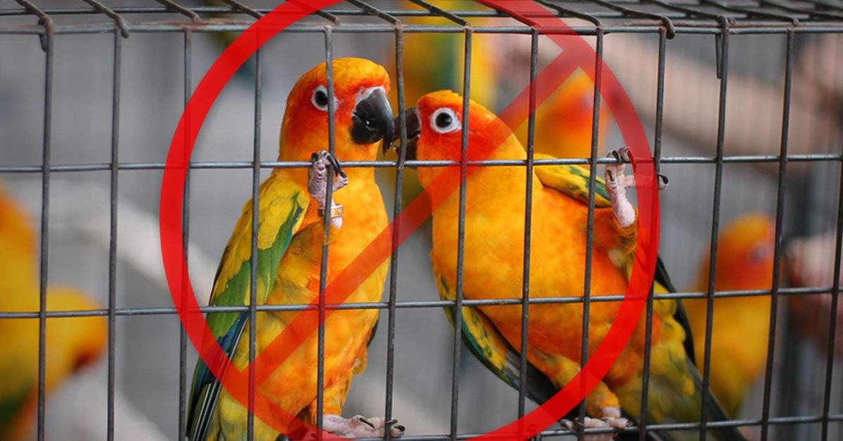 Es oficial: este país prohibió enjaular y comercializar aves