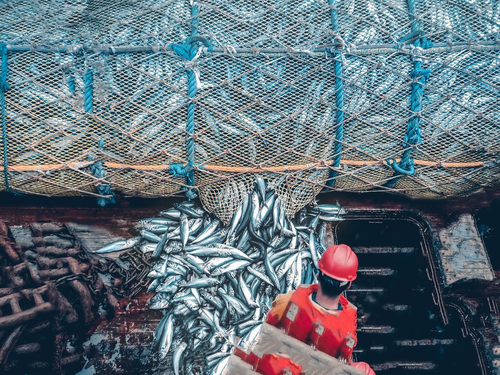 El Reino Unido busca prohibir la pesca de arrastre en las áreas marinas protegid