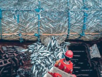 pesca-de-arrastre