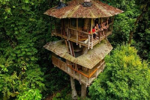 Una casa del árbol que es hotel y  santuario natural