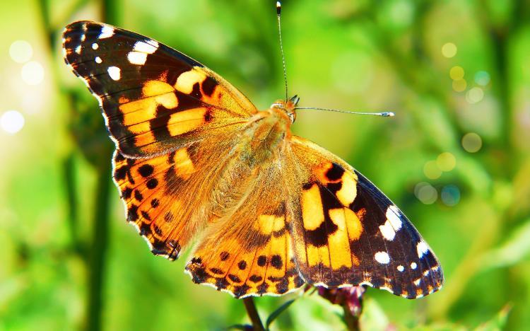 que significa que una mariposa se pose en ti.jpg