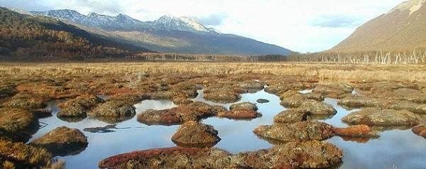Humedales: Reservas de agua dulce