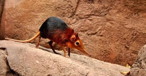 Todos los humanos provenimos de unos seres pequeños parecidos a las musarañas