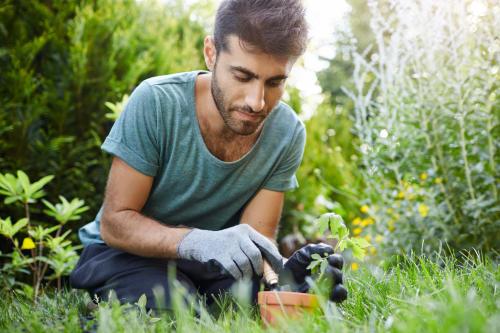 Conoce las 5 razones por las que tus plantas podrían no florecer