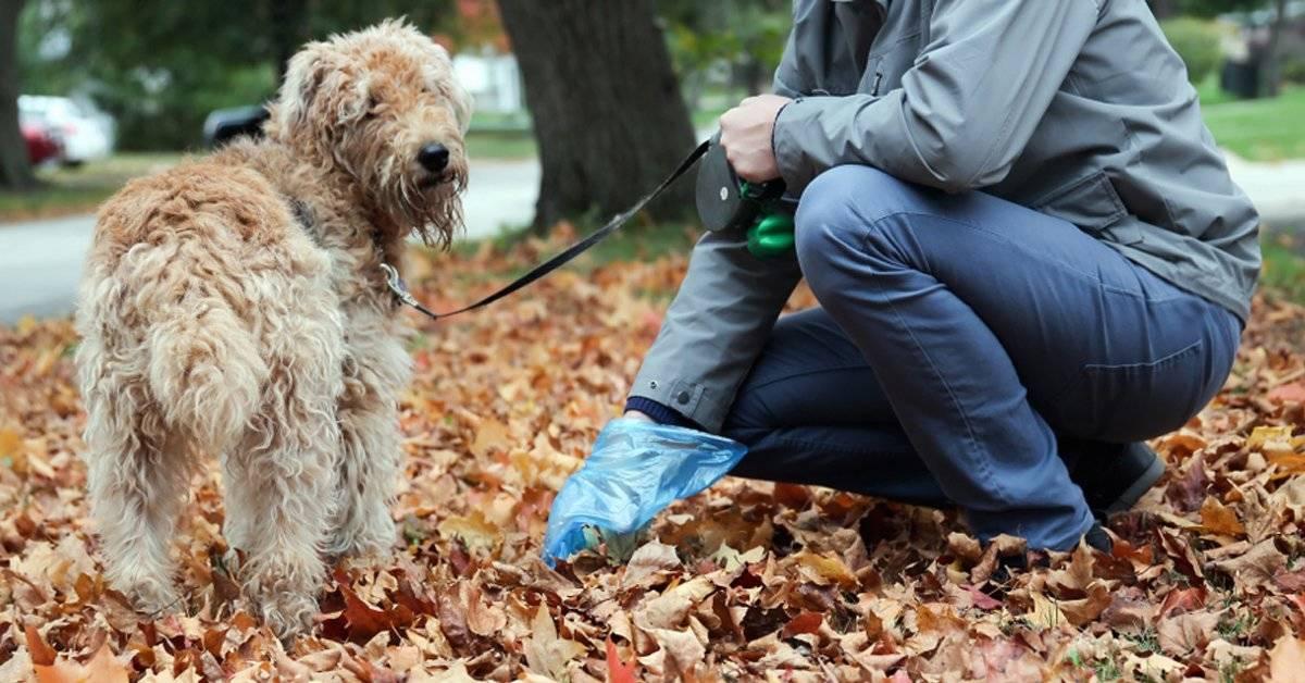 Multarán a quienes no levanten el excremento de sus perros en la calle