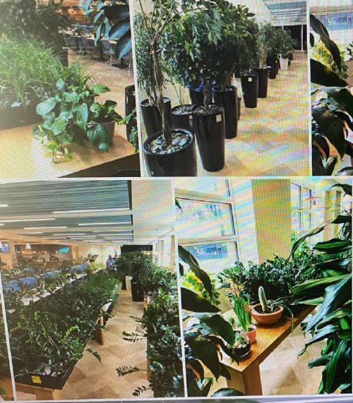 security-team-saves-plants-during-pandemic-7-5f4fa4968f58a__700