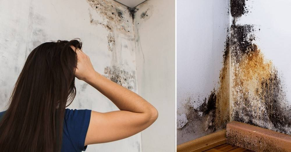 Este moho negro tóxico podría estar en tu hogar, pero te explicamos como rec..