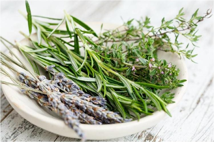 5 plantas medicinales para tener en tu casa