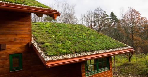 Techos verdes: definición, beneficios y cómo hacerlos en tu hogar