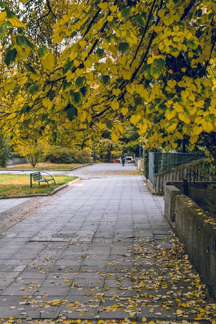 Parque otoño hojas