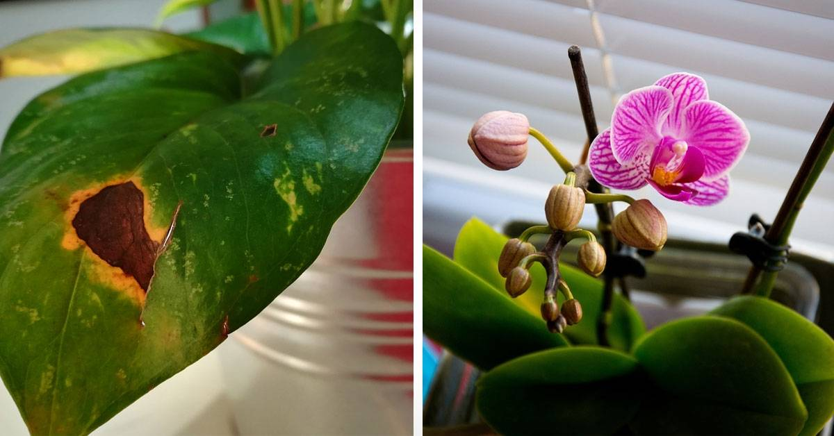 7 errores que estás cometiendo en el cuidado de tus plantas sin saberlo