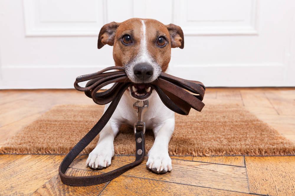 Paseó a su perro con un dron para no romper la cuarentena