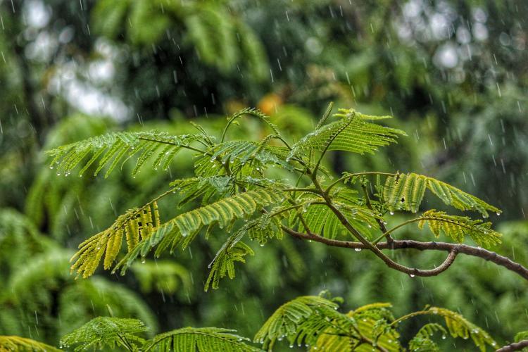 La lluvia ácida impacta en la fauna y flora a través de la cadena alimentaria.