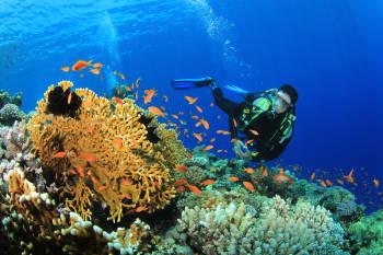 buceo, peces y arrecifes de coral