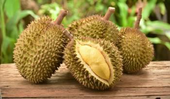 fruta apestosa durian