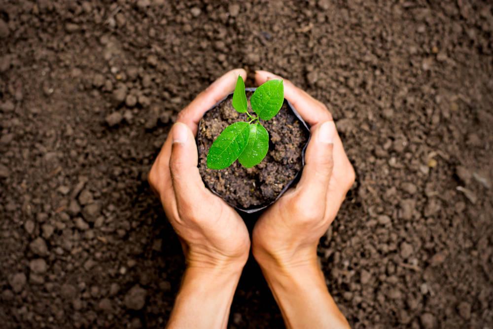Colombia se prepara para una gran jornada de siembra